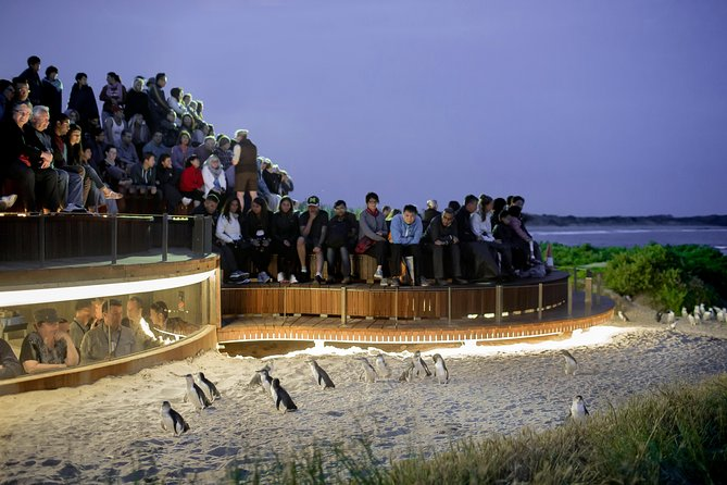 1 Day Private Phillip Island Tour VIP Charter up to 9 People - Accommodation Sydney