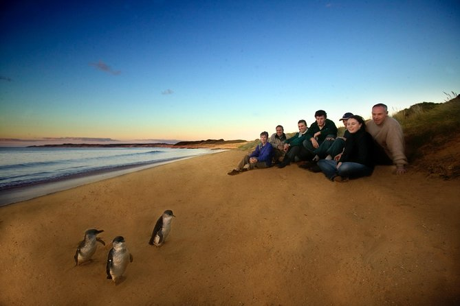 Phillip Island Ultimate Penguin Eco Tour or Skybox Experience - Accommodation Sydney