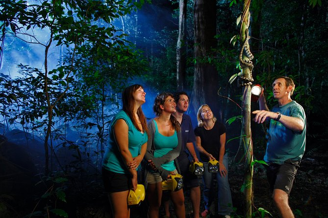 Daintree Rainforest Night Walk from Cape Tribulation - Accommodation Sydney
