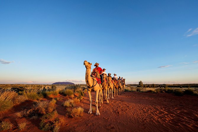 Uluru Camel Express Sunrise or Sunset Tours - Accommodation Sydney