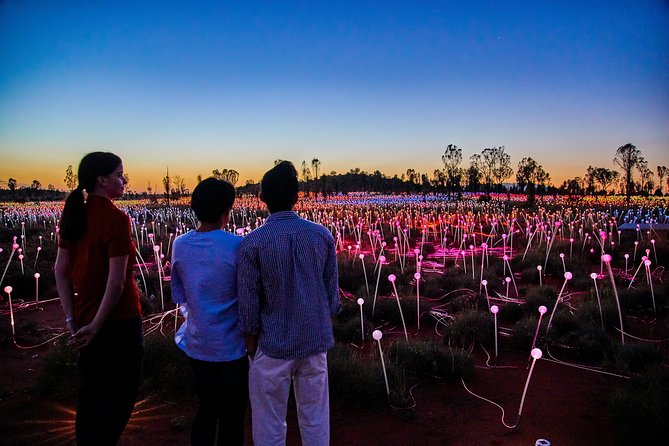 Uluru Field of Light Sunrise Tour - Accommodation Sydney