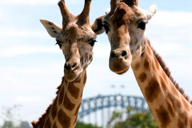 Sydney Harbour Ferry with Taronga Zoo Entry Ticket - Accommodation Sydney