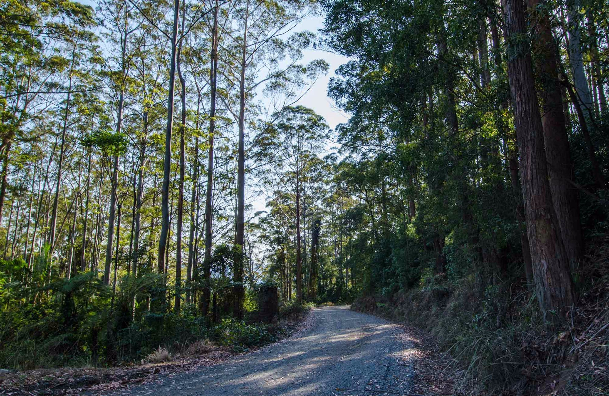Hastings Forest Way Touring Route - Accommodation Sydney