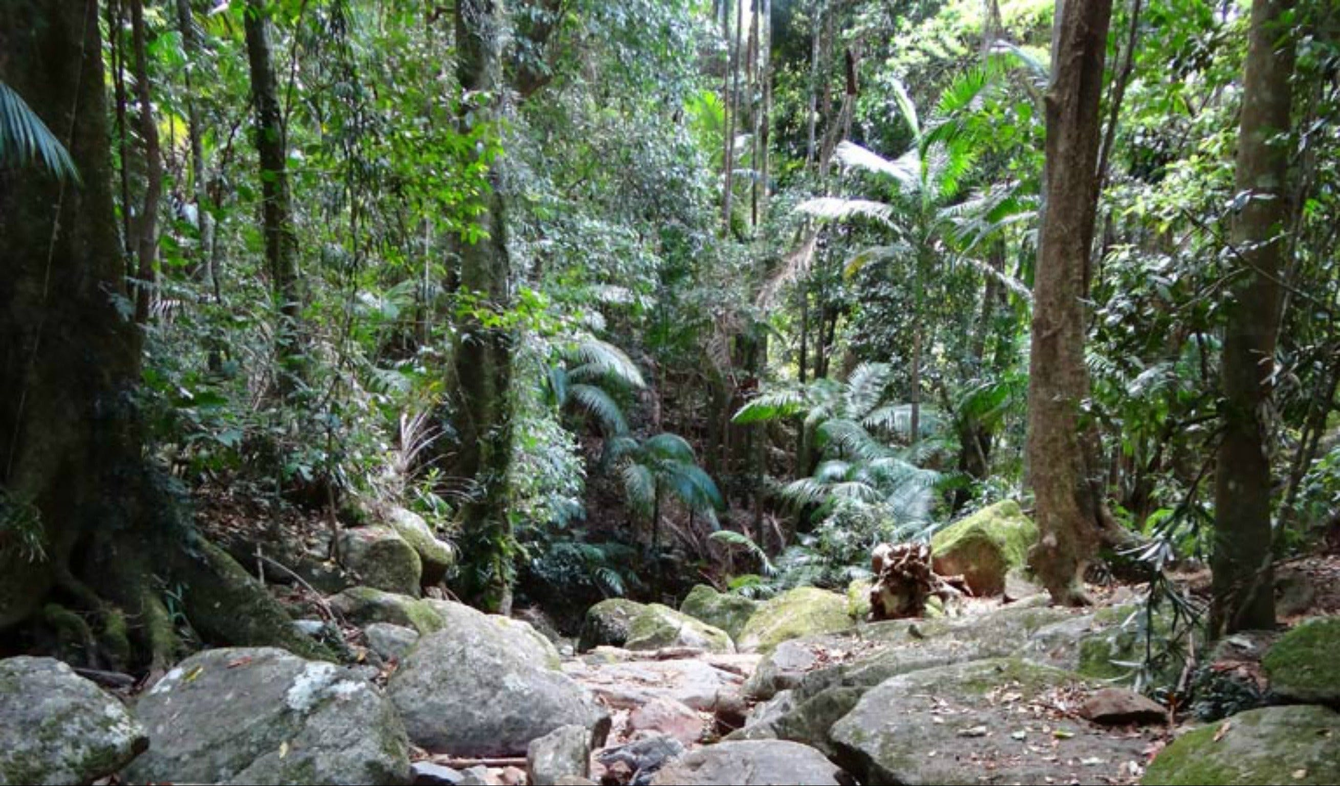 Lyrebird track - Accommodation Sydney