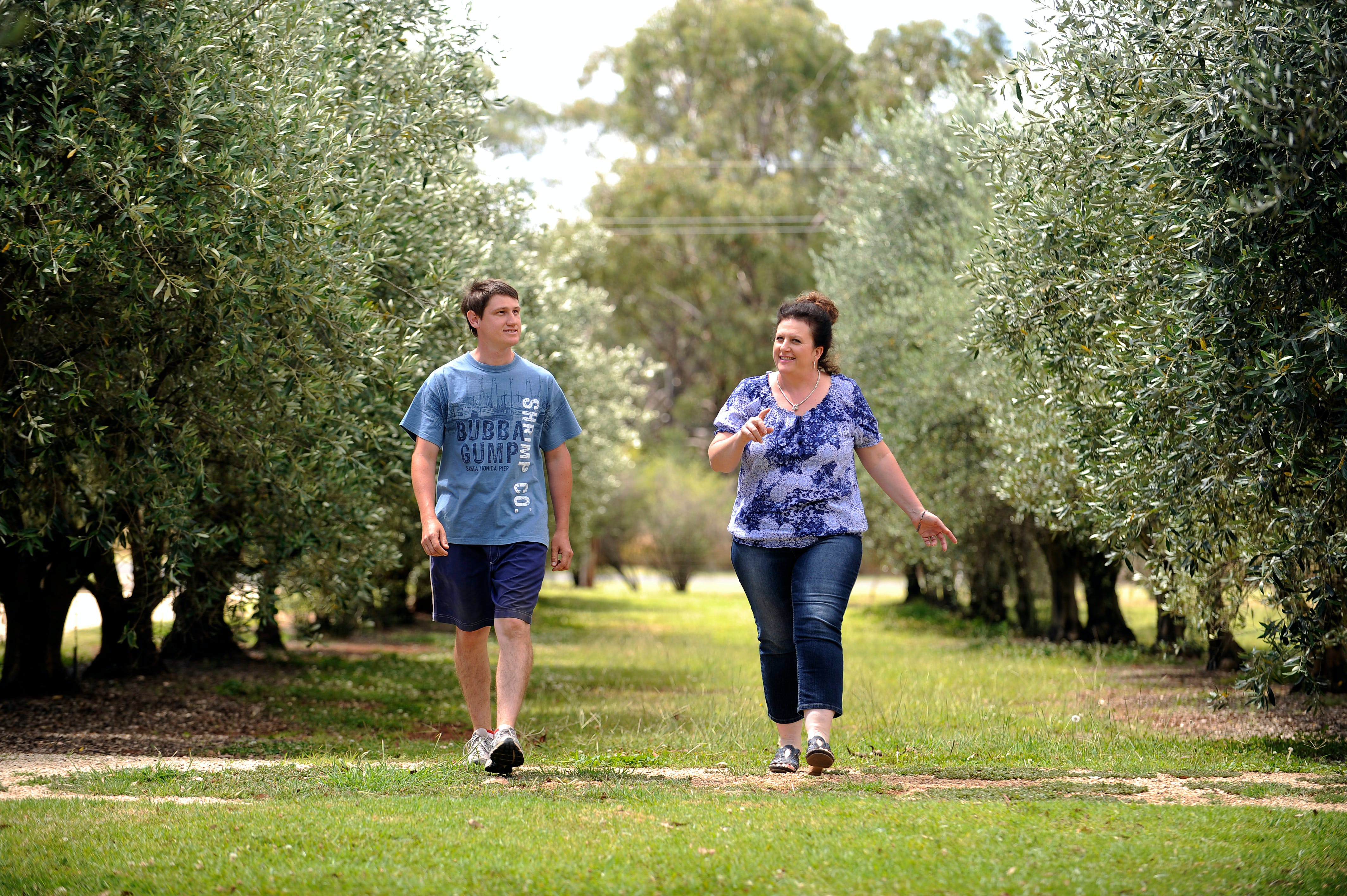Olives of Beaulieu - Accommodation Sydney