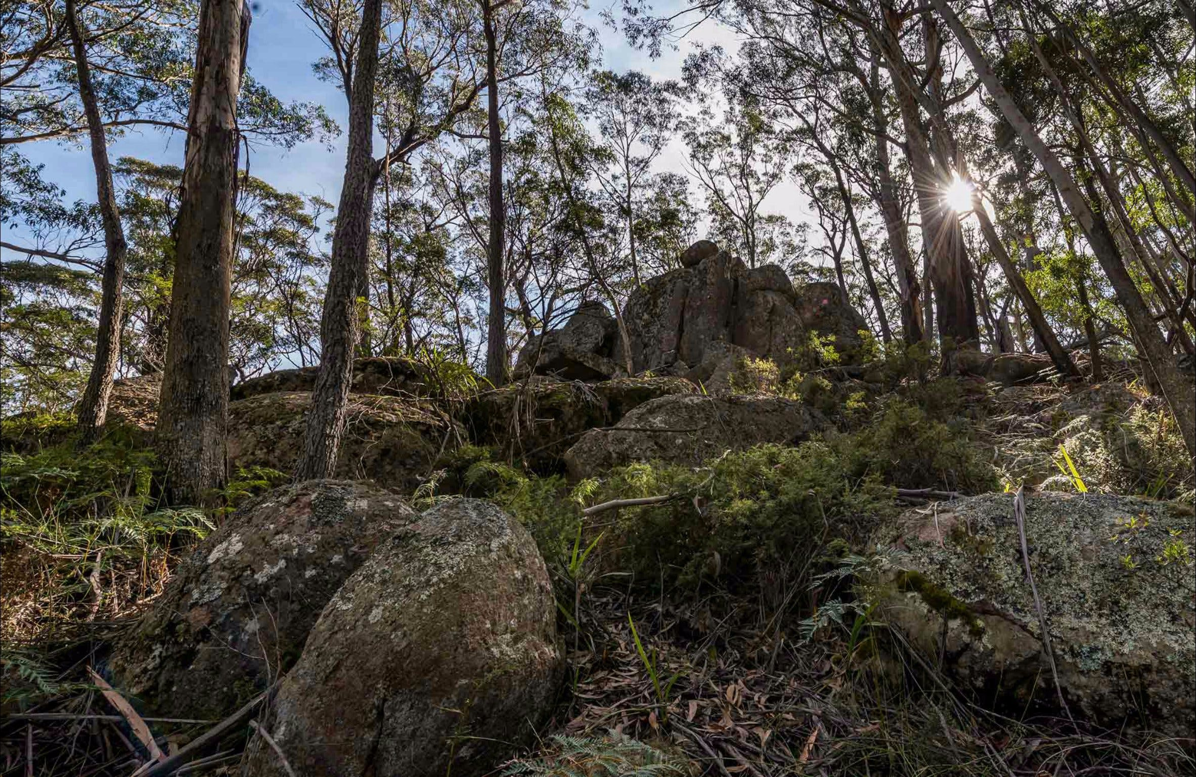 Pheasants Peak Walking Track - Accommodation Sydney
