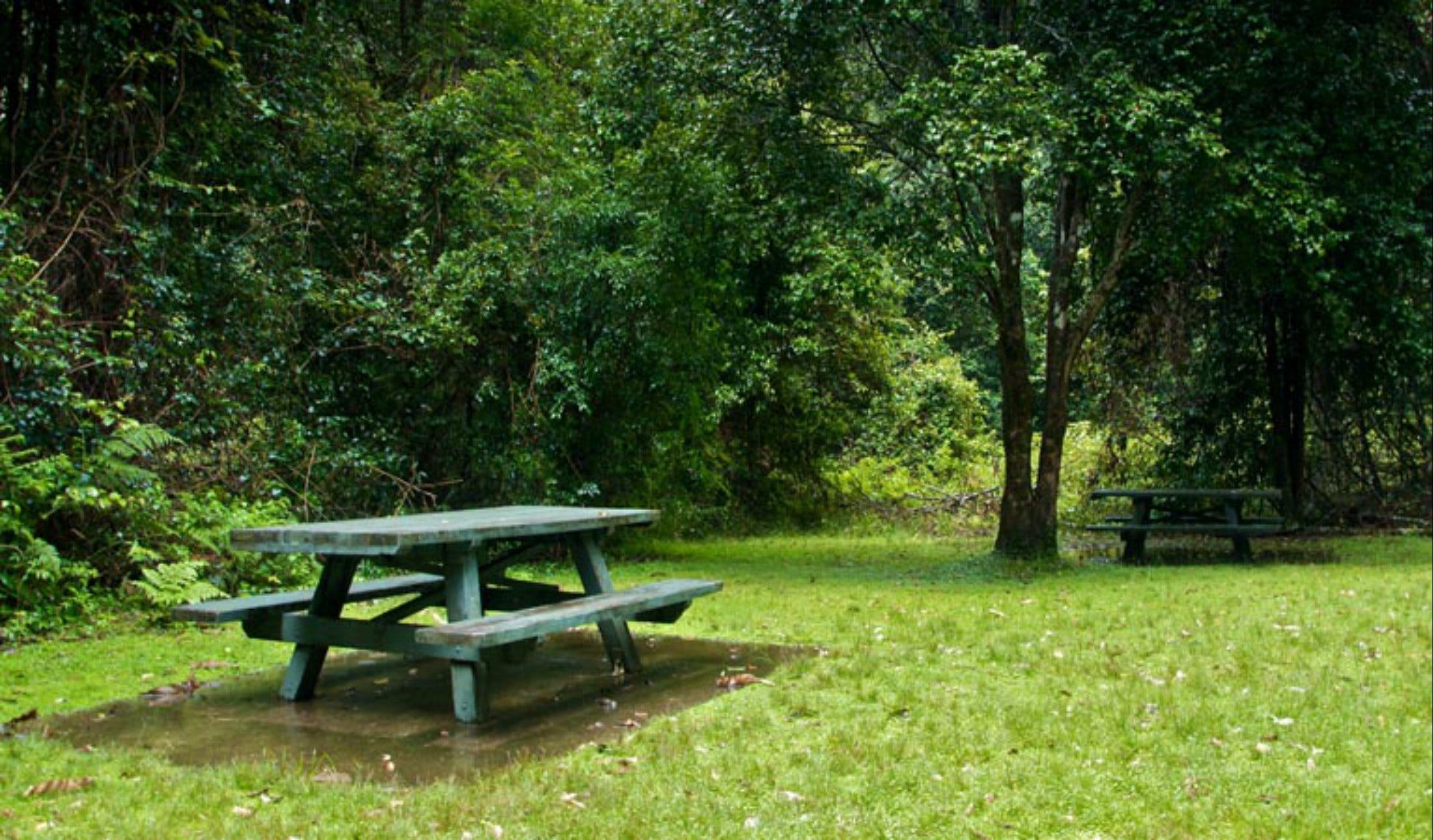 Williams River picnic area - Accommodation Sydney