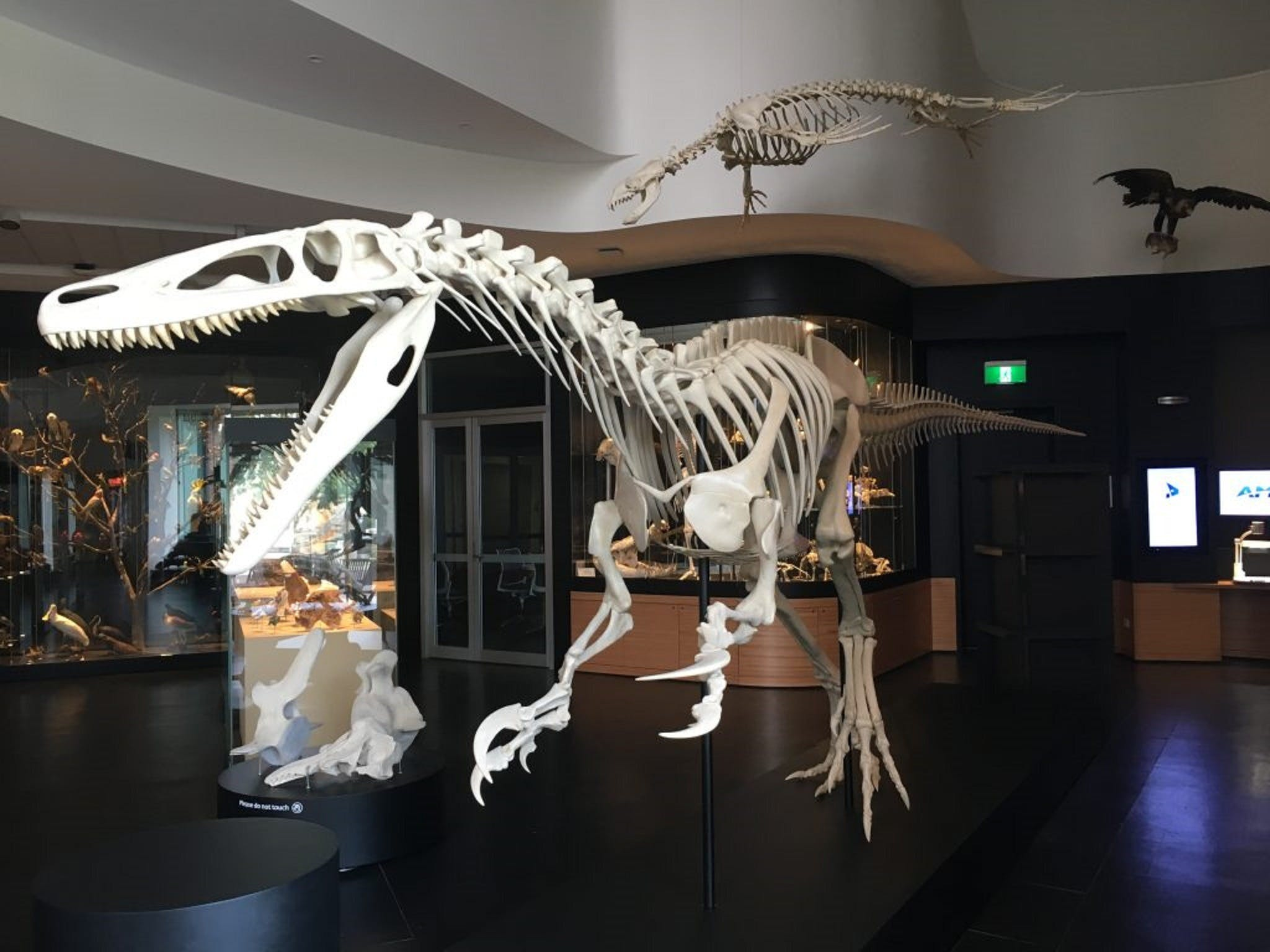UNE Natural History Museum - Accommodation Sydney