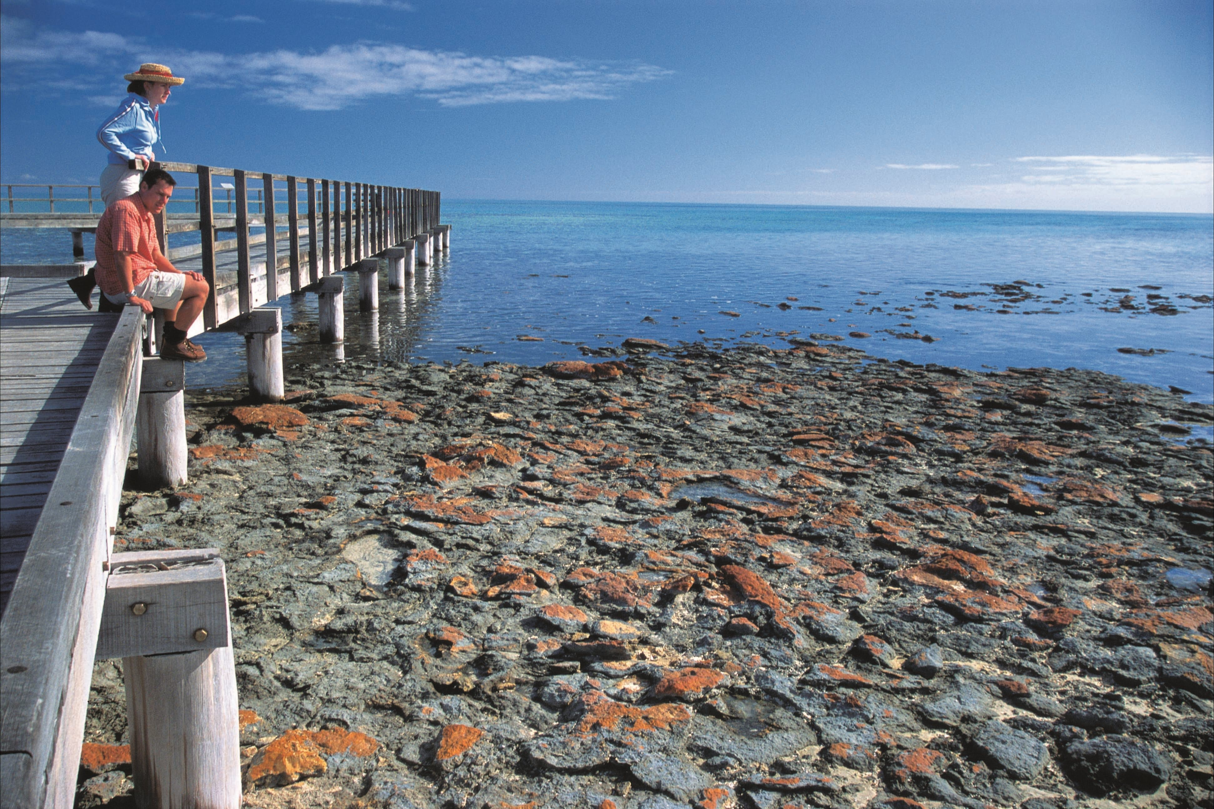 Hamelin Pool Stromatolites - Accommodation Sydney