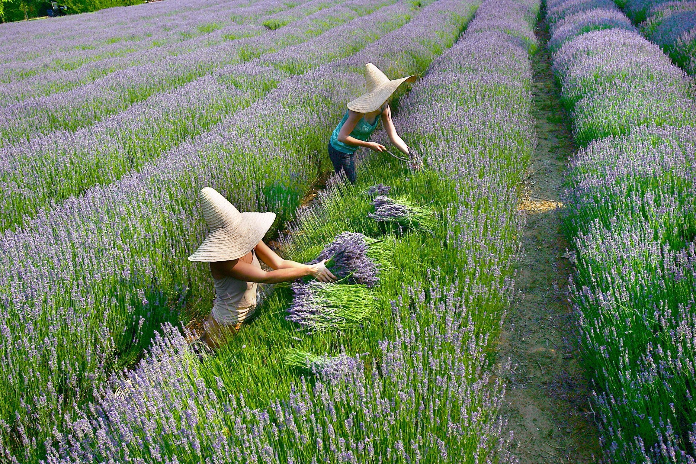 Lavandula Swiss Italian Farm - Accommodation Sydney