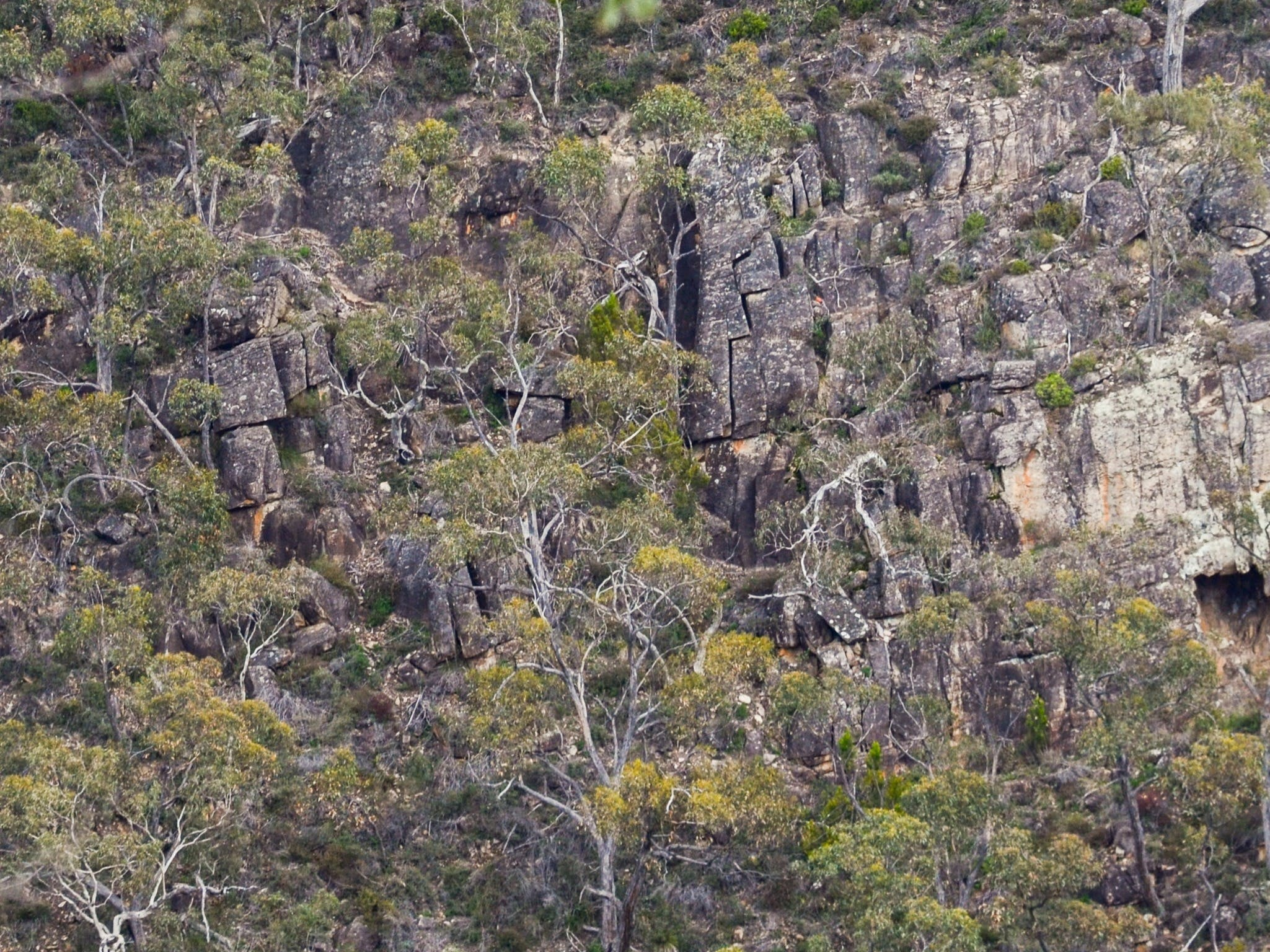 Horsnell Gully and Giles Conservation Parks - Accommodation Sydney