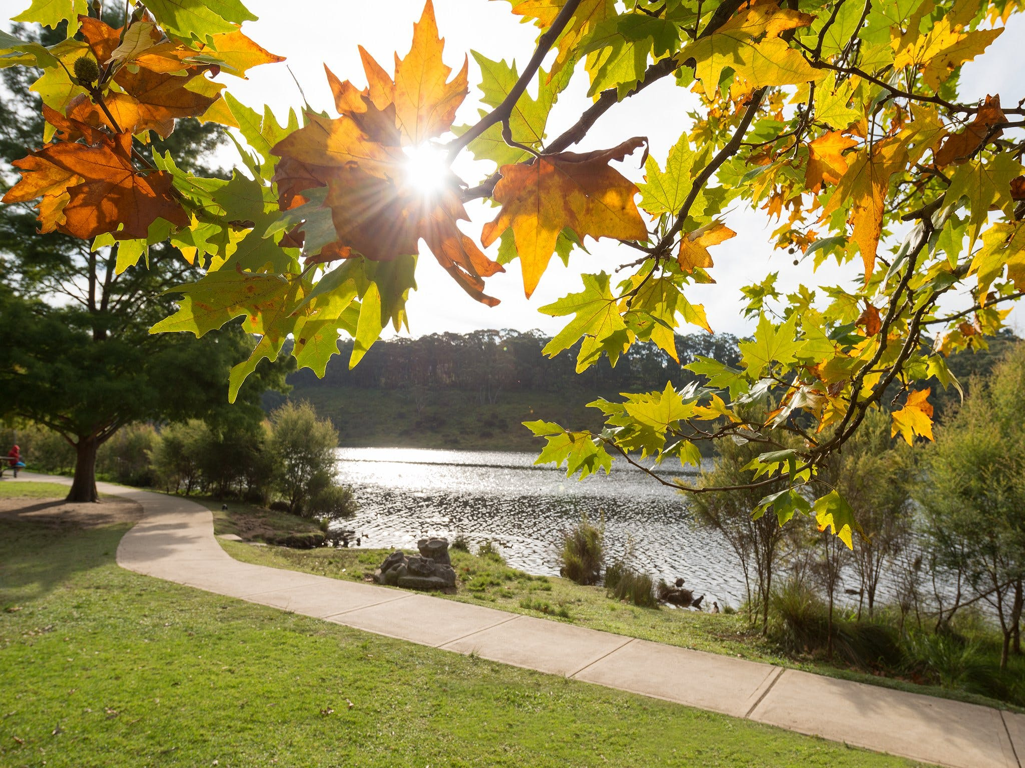 Wentworth Falls Lake - Accommodation Sydney