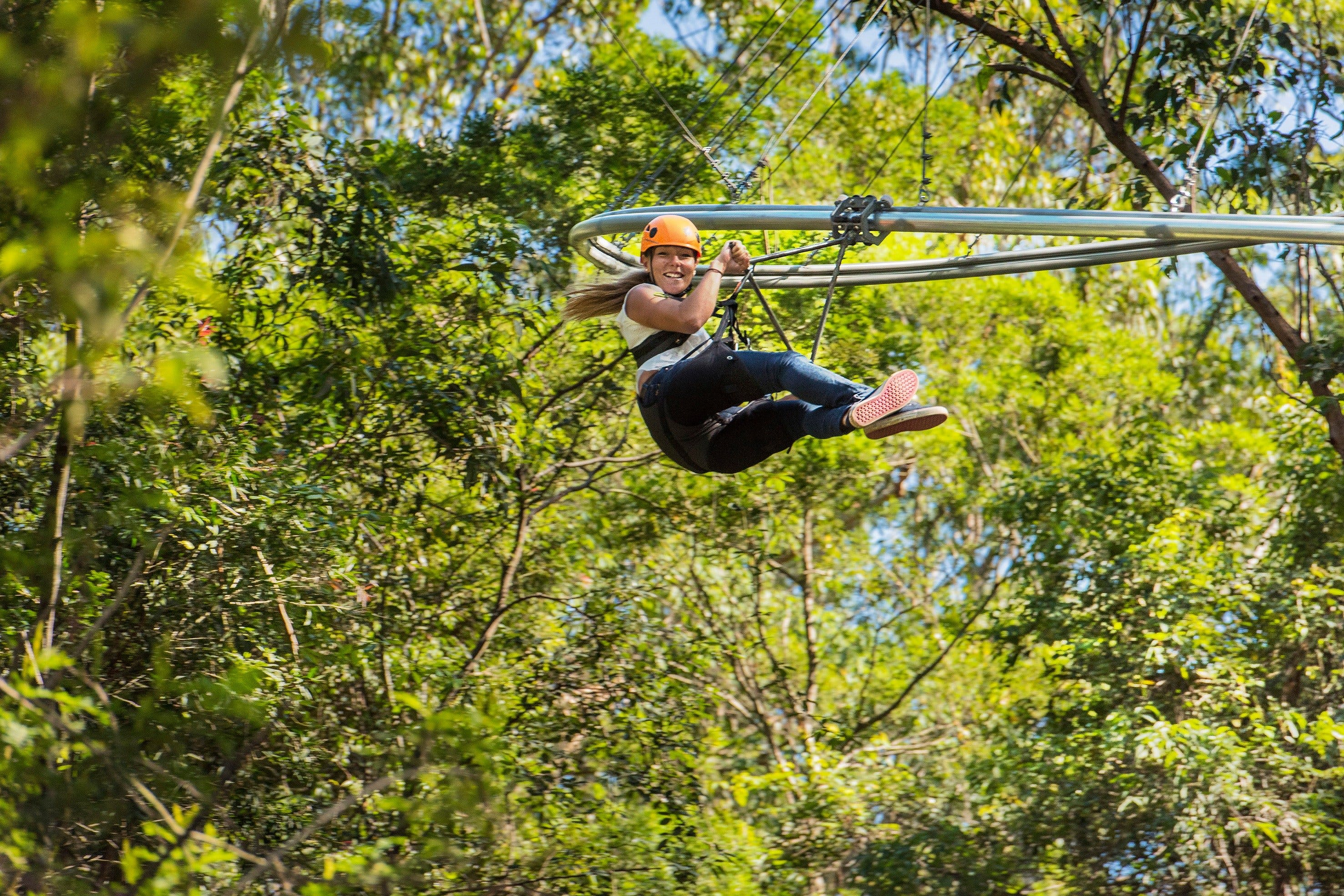 TreeTop Crazy Rider - Accommodation Sydney