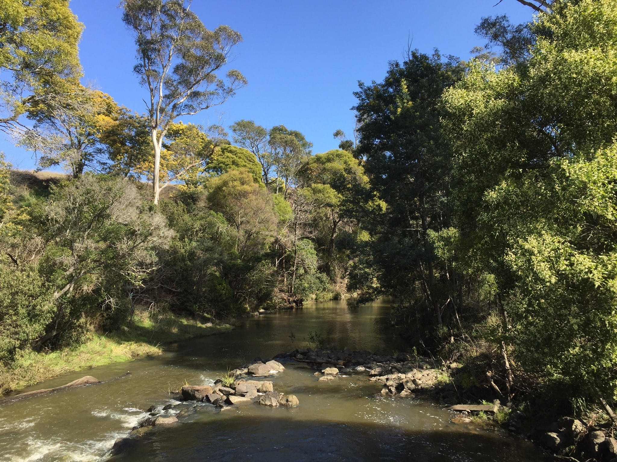 Pipers River Board Walk - Accommodation Sydney