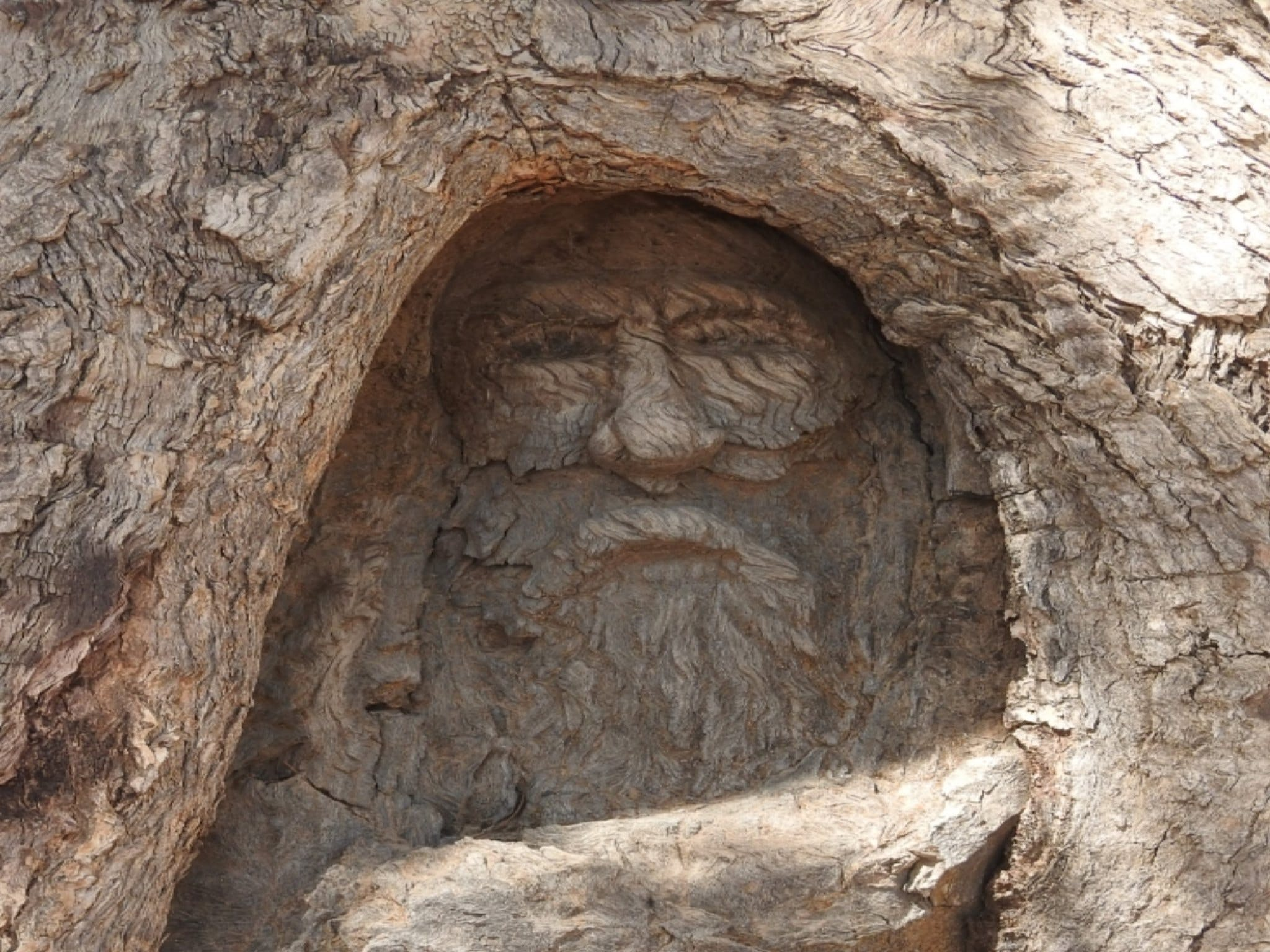 The Face Tree near Burke and Wills Dig Tree - Accommodation Sydney