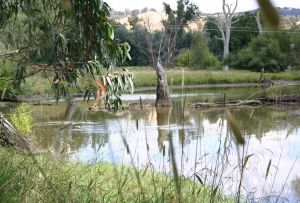 Tumut Wetlands - Accommodation Sydney