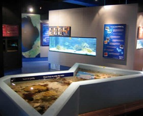 Marine and Freshwater Discovery Centre - Accommodation Sydney
