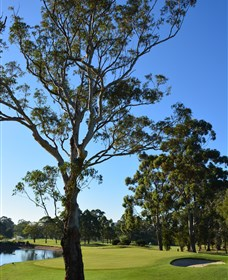 Ryde-Parramatta Golf Club - Accommodation Sydney