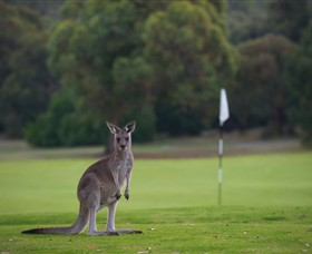 Anglesea Golf Club - Accommodation Sydney