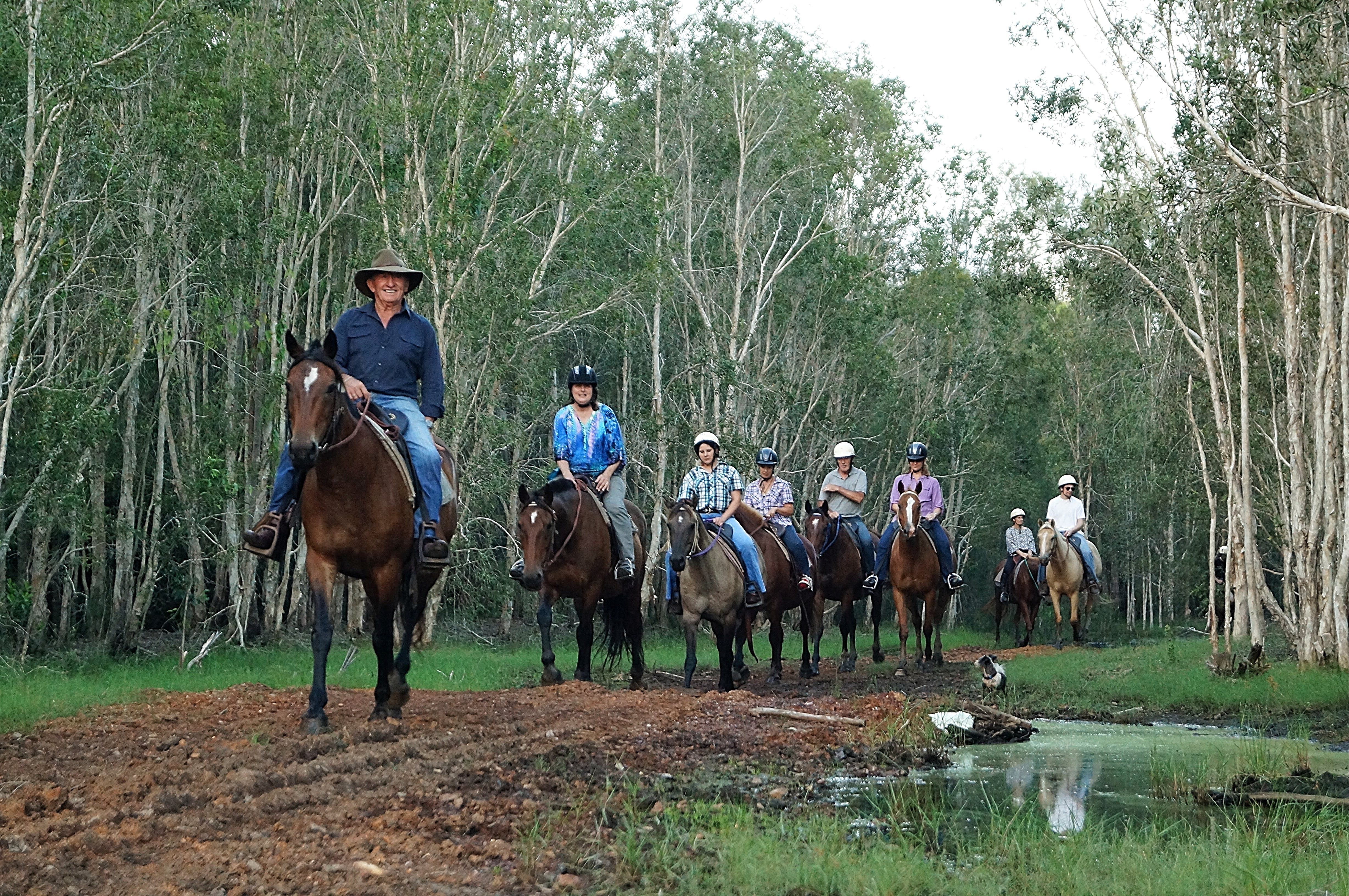 Night Horse Ride and Dinner - Accommodation Sydney