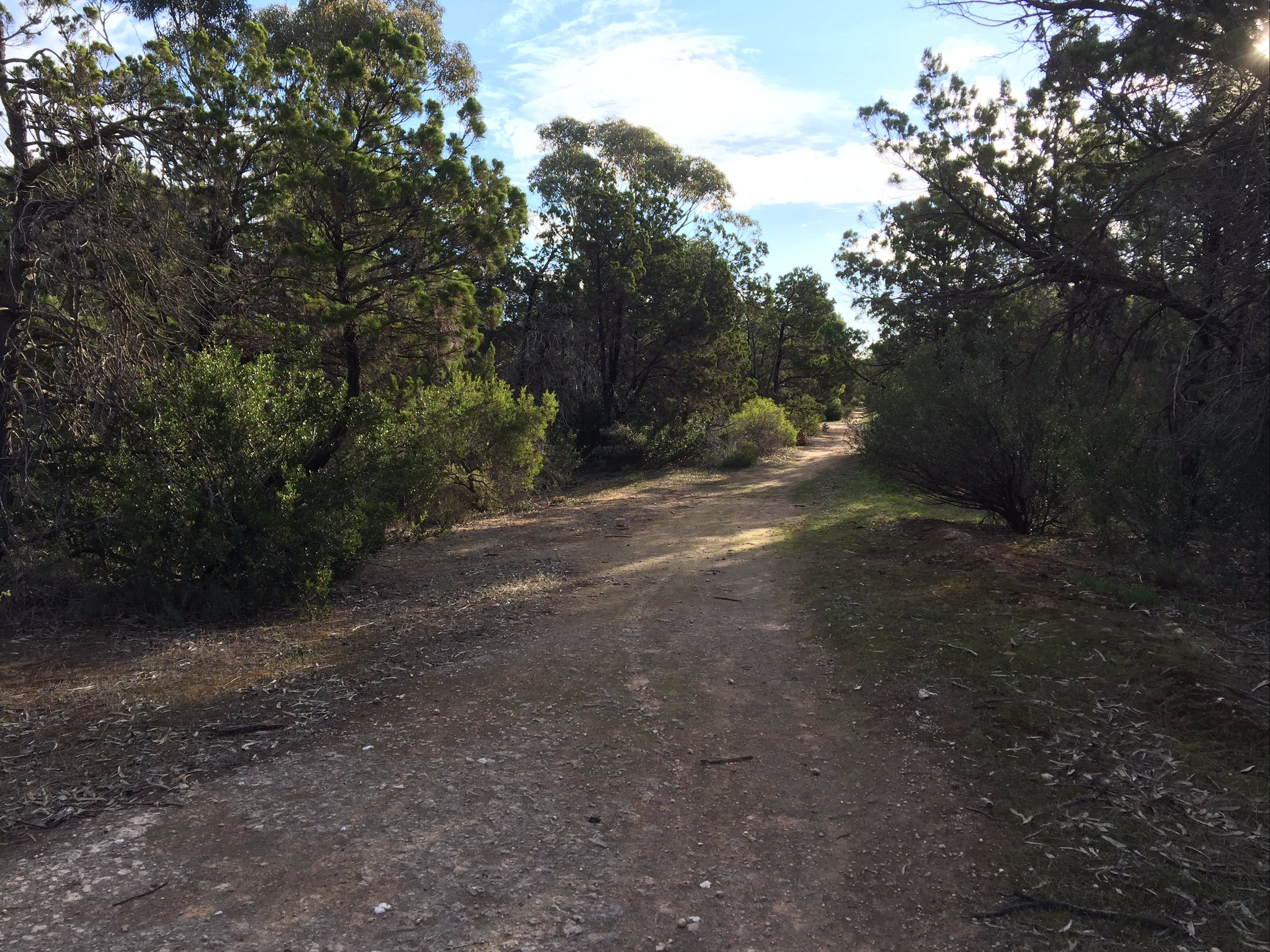 Victoria Park Moonta monthly walks - Accommodation Sydney