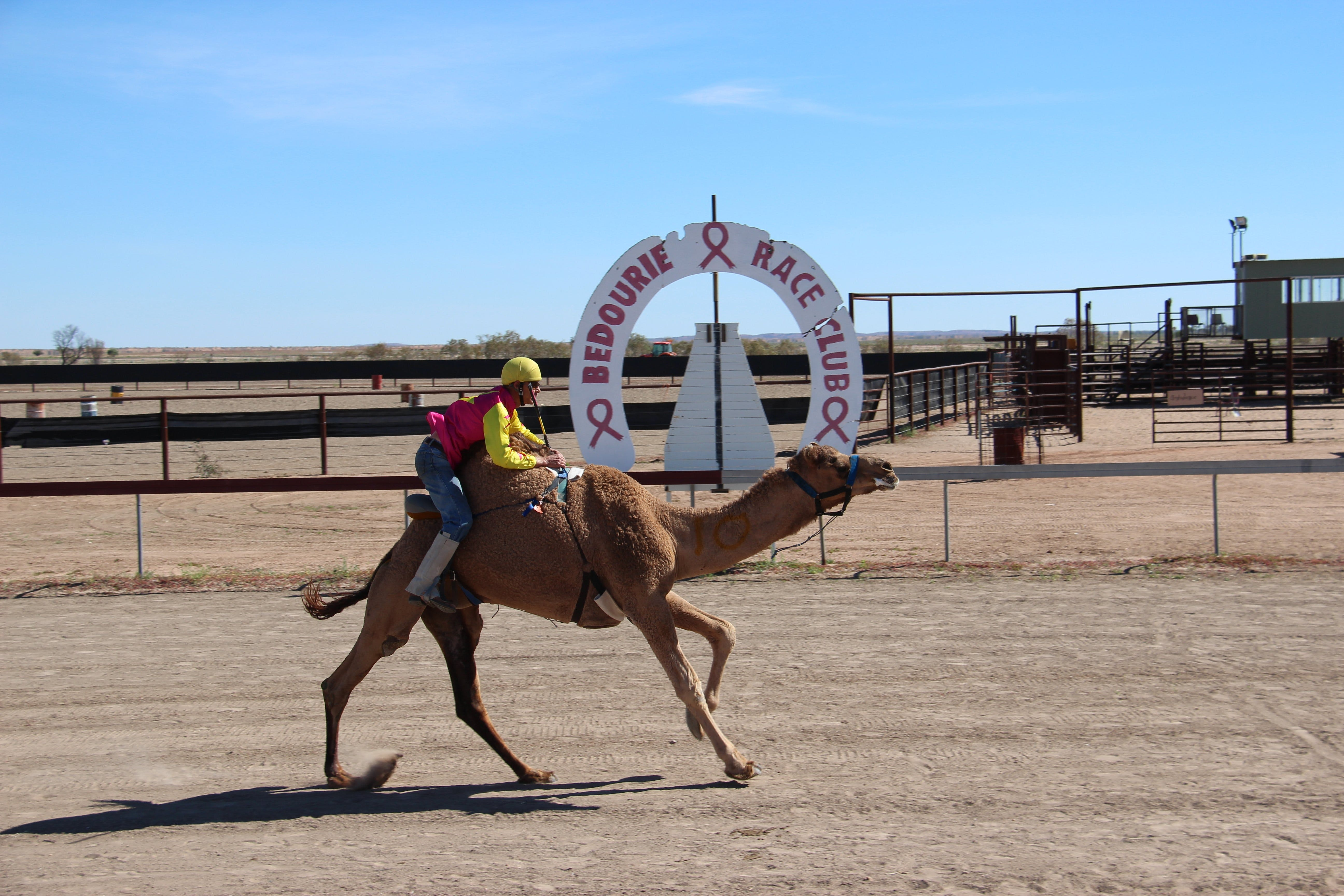 Bedourie Camel and Pig Races and Camp oven Cook-off - Accommodation Sydney